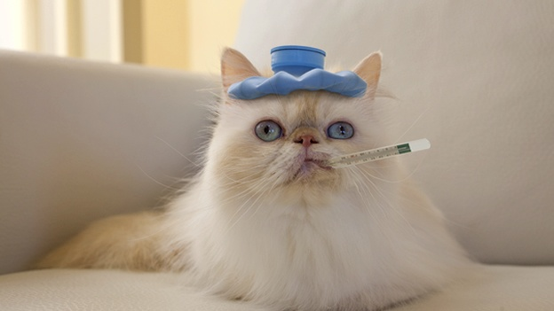 sick-cat-mascota-pet-gato-enfermo-termometro-animal-vet1